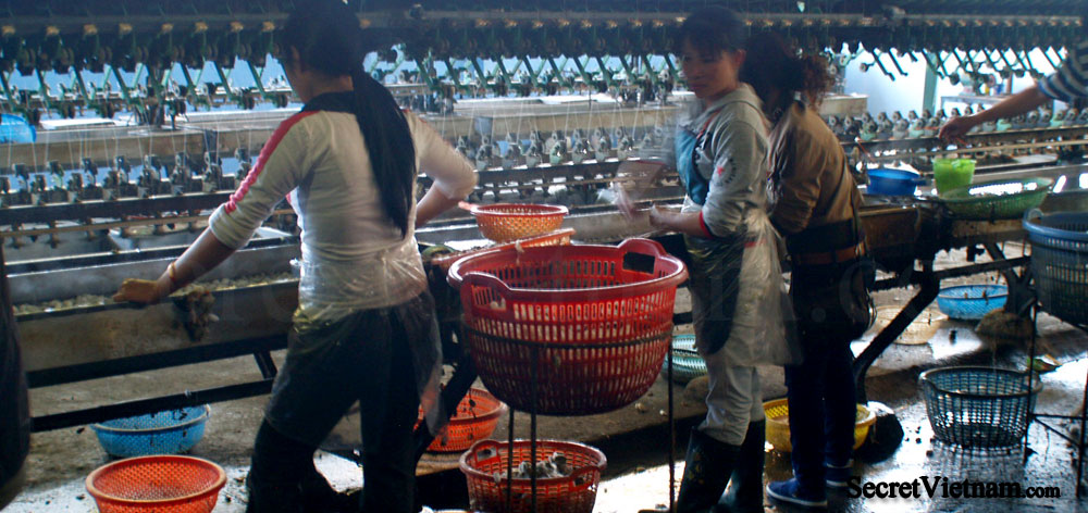 Dalat Silk Weaving Factory
