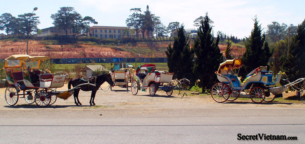 Horse Riding in Dalat