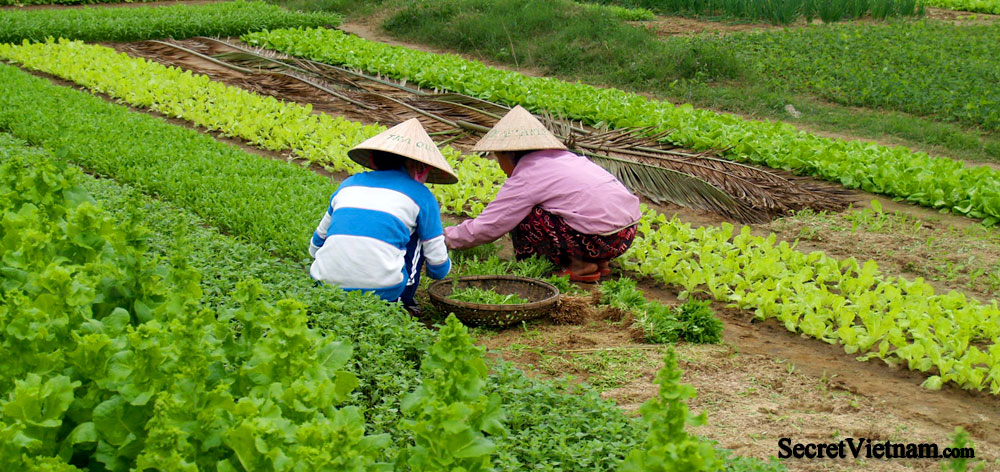 Tra Que Vegetable Village, Farmers Village & Plantations