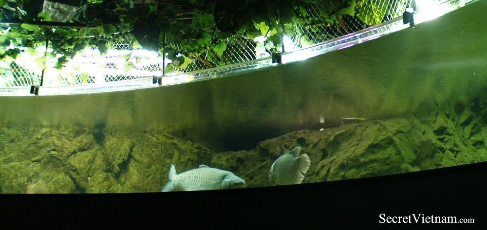 Underwater World Aquarium, Vinpearl Amusement Park