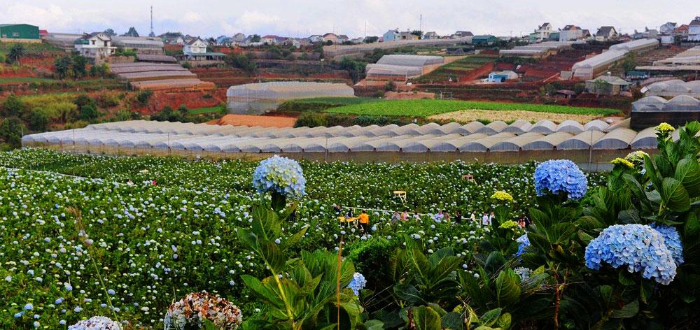 Dalat Flower Farms