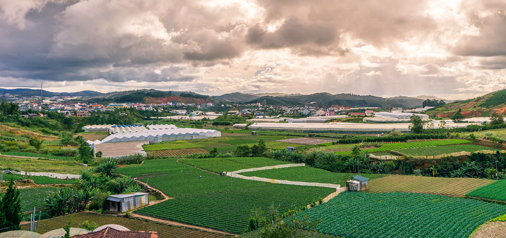 Greenhouses in Dalat