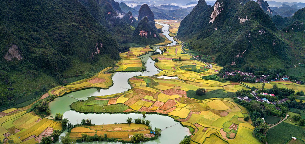 The Stunning Golden Rice Field In Tam Coc